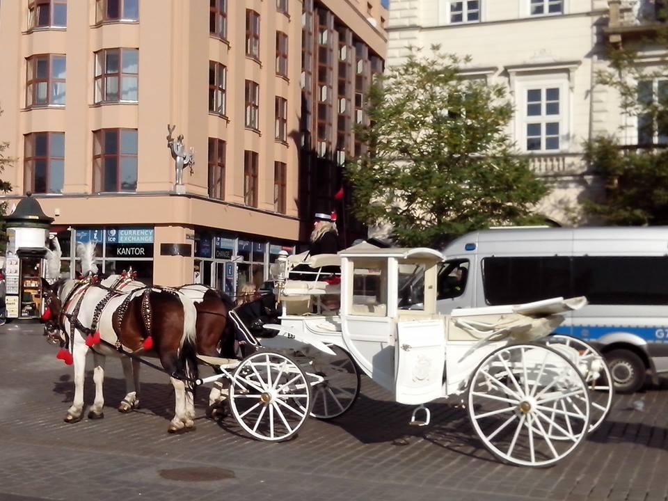 Najbolji je prevoz konjima