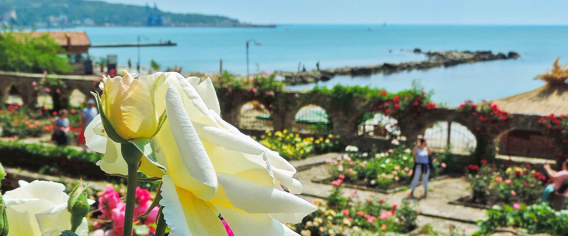 Bugarska ruža na moru